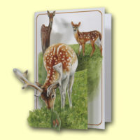 PIC213 Deer