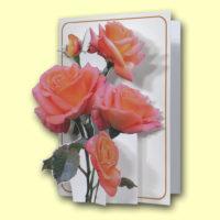 PIC217 Pink Roses
