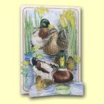 PIC206 Mallard Ducks